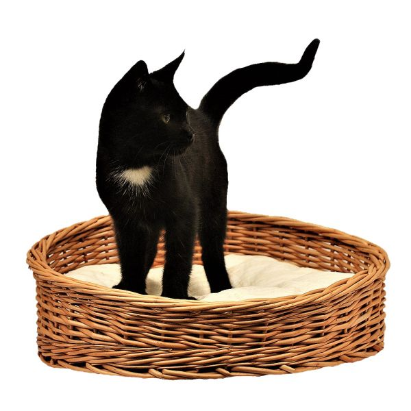 Katzenkorb mit Kissen