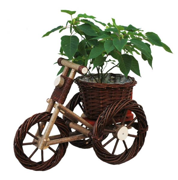 Fahrrad Weide